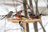 kormu6ki200 ptizi