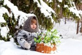 12720901-little-girl-in-a-winter-wood-with-the-big-basket-of-snowdrops
