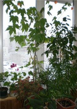 balkon250 zima