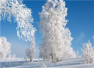 zima 300